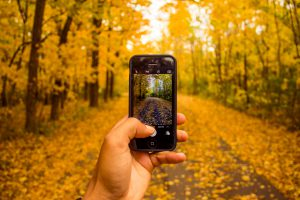 A picture of a phone in fall.